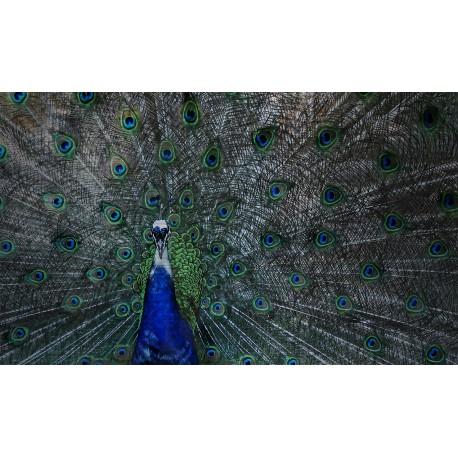 Tablou imagine pe DIBOND, RVS077, 118x70 cm
