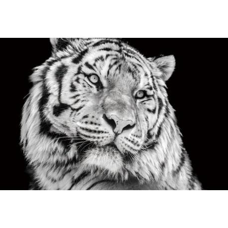 Tablou Sticla, 120x80x0.4 cm