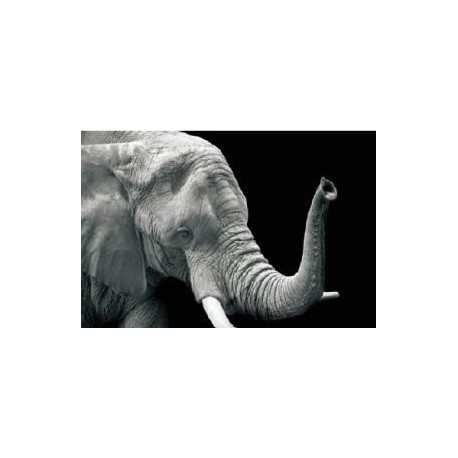 Tablou Sticla, 70x50x0.4 cm
